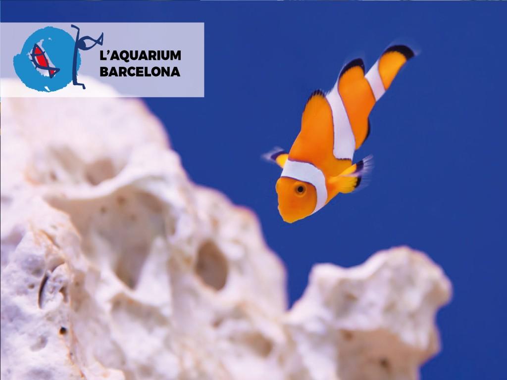 L'Aquàrium Barcelona