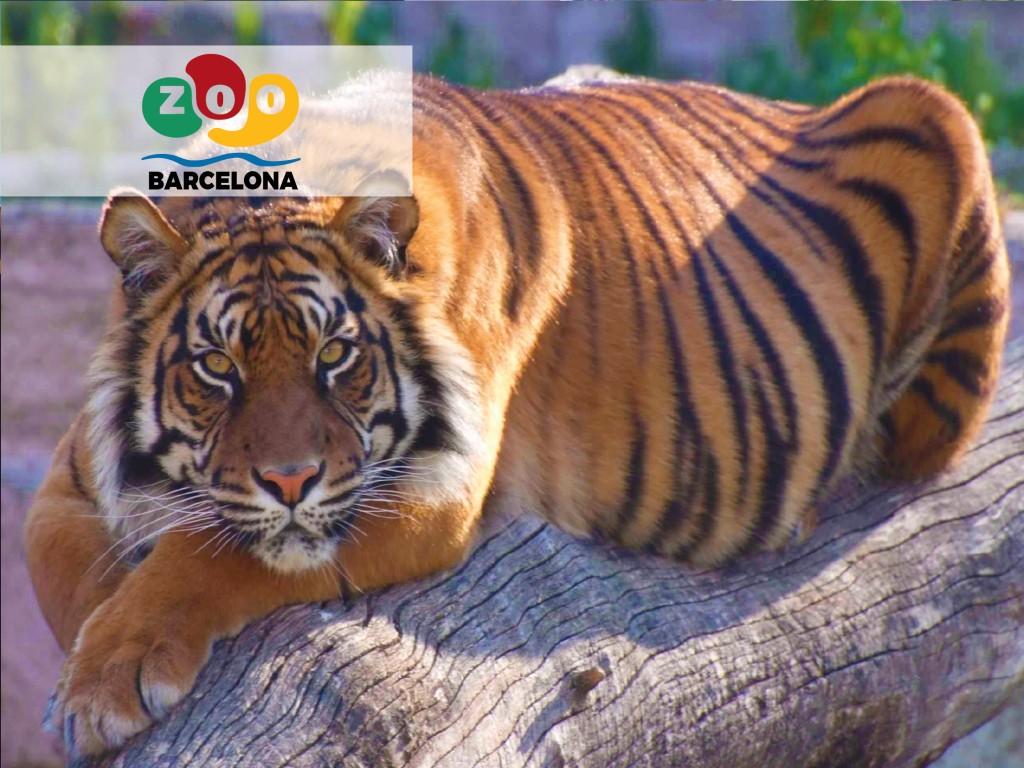 Ticket Barcelona Zoo