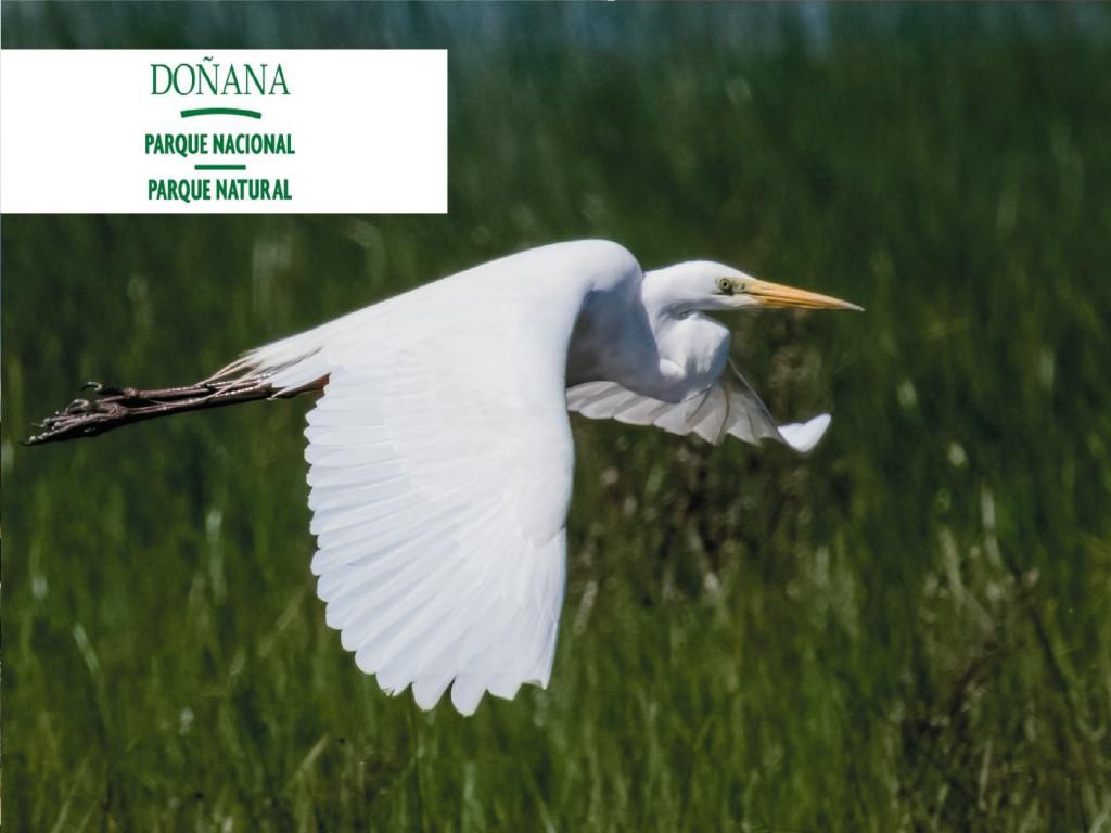Doñana, excursióndesde Sevilla