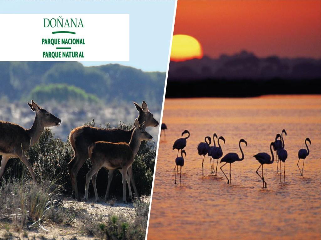 Doñana desde Sevilla + 4x4 Zona Sur