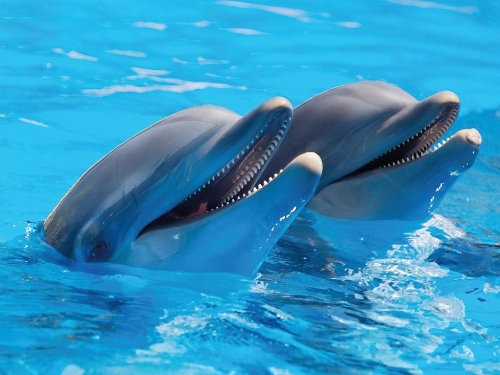 Mundomar Oferta Delfín