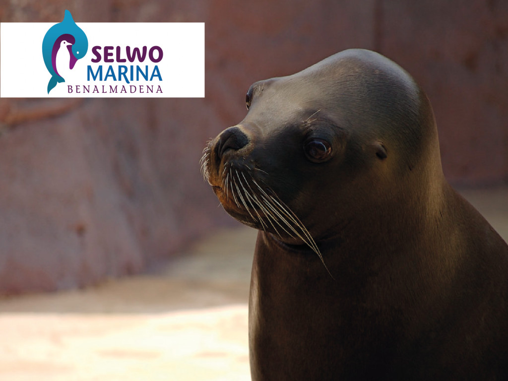 Selwo Marina Offer
