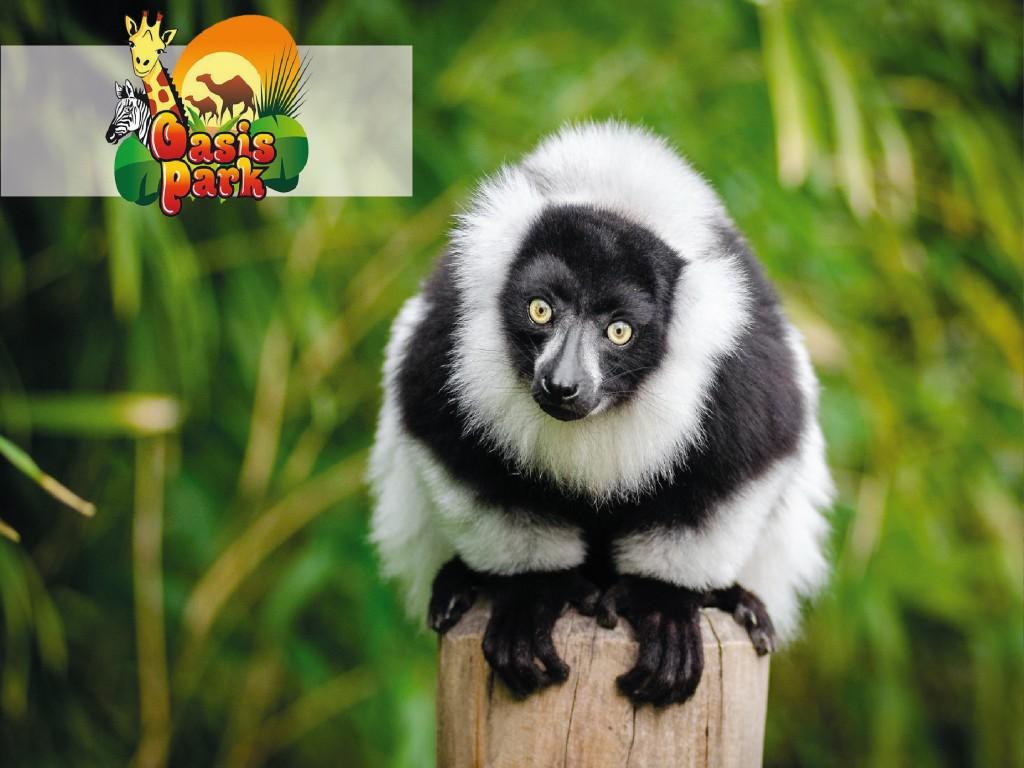 Experiencia Lemures en Oasis Park