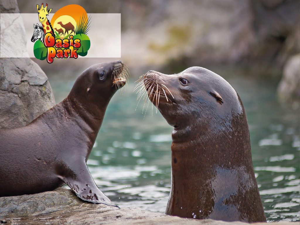 Sea Lion Experience at Oasis Park