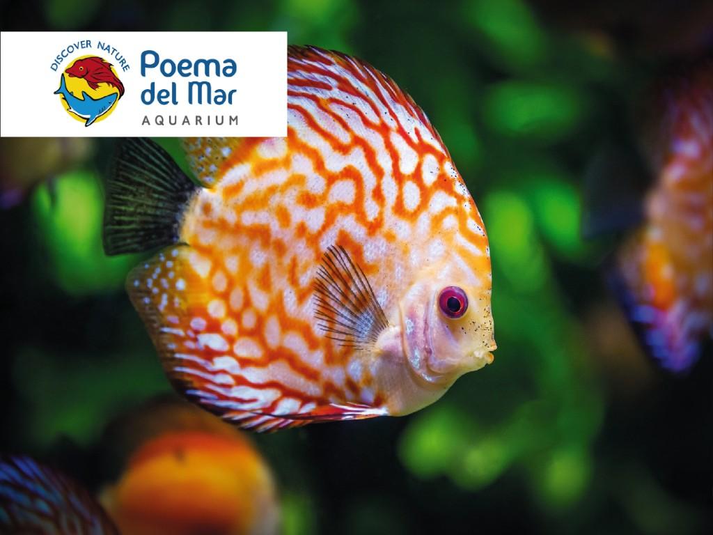 Entradas Poema del Mar (Residentes)